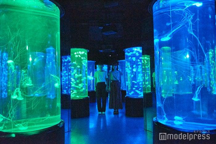 まるで万華鏡のようなクラゲのアクアリウム。幻想的な世界が広がります。(C)モデルプレス