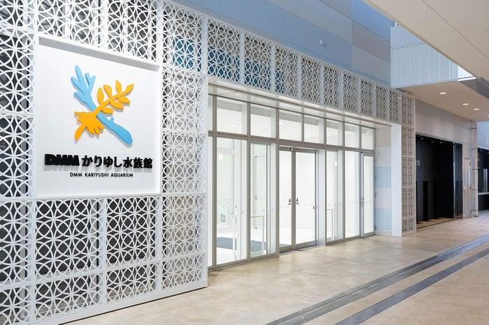 DMMかりゆし水族館(提供画像)