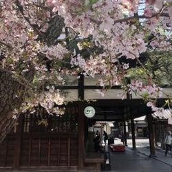 京都の中心部で桜をじっくり堪能したい!おすすめの隠れお花見スポット