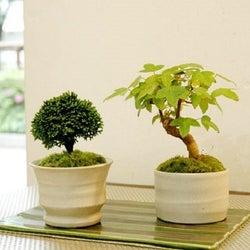 盆栽にハマる人急増中!春はお部屋にグリーンを取り入れてみて♡