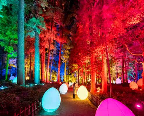 「チームラボ 偕楽園 光の祭」日本三名園・偕楽園の梅林で光のアート演出