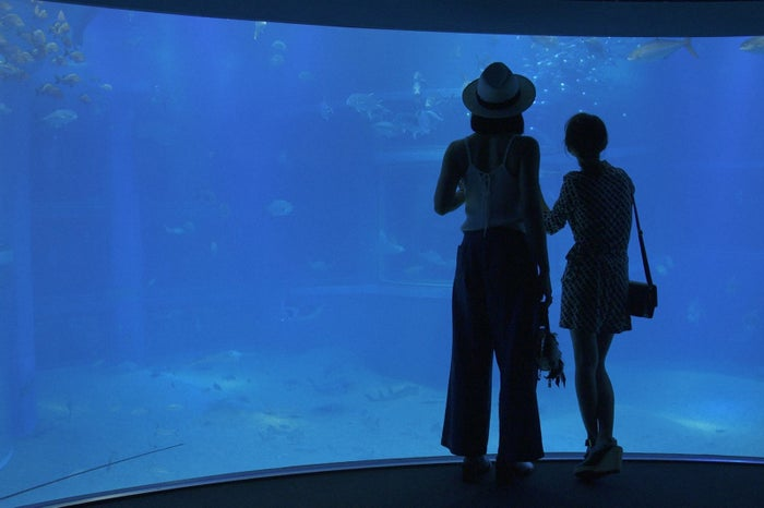 海遊館/画像提供:TBS