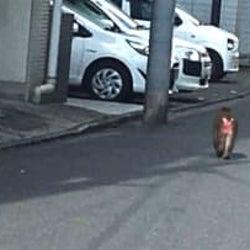 墨田区など目撃情報相次ぐ 目撃者「けっこう大きかった」