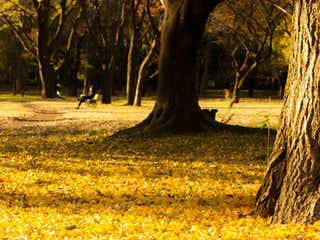 距離を縮めたいカップルにおすすめ! 秋の都内・お散歩デートプラン