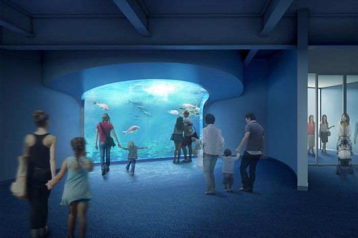 うずしお水槽/画像提供:四国水族館開発
