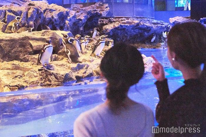 すみだ水族館(C)モデルプレス