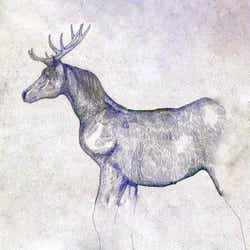 「馬と鹿」CD映像盤ジャケット(提供画像)