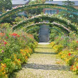 「モネの庭」花の庭/提供写真