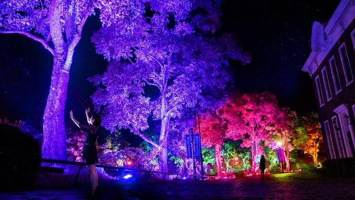 呼応する木々※写真:呼応する木々,長崎/画像提供:チームラボ