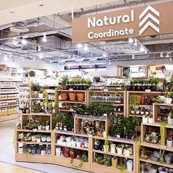 大創産業、カナダに初出店 国内は新業態「ナチュラルコーディネート」