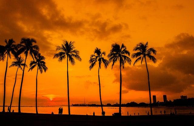 マジック・アイランド/Hawaii Palm Trees Sunset Magic Island by Anthony Quintano
