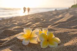 ハワイ・ホノルル市が、国際結婚で全米最多な理由
