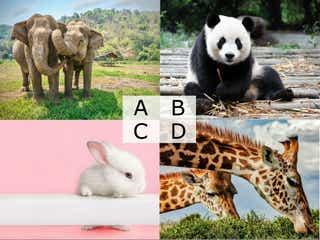 <診断>動物園デートで彼と一緒に見たい動物はどれ?あなたと彼のラブラブ度を診断!