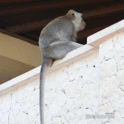 ウルワツ寺院では野生の猿に会えます(C)モデルプレス