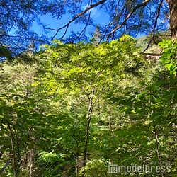 緑の葉っぱに太陽の光が射し込み、美しい眩しさを放つ樹林帯(C)モデルプレス