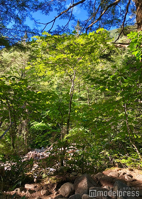 緑の葉っぱに太陽の光が射し込み、美しい眩しさを放つ樹林帯(C)ビューティーガール