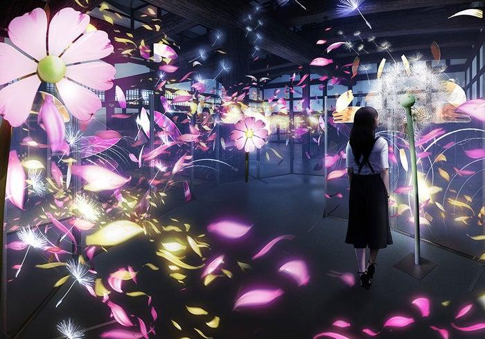 秋桜と蒲公英(コスモスとタンポポ)展示場所:重要文化財 台所/画像提供:ネイキッド