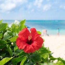 【新婚旅行】おすすめの国内エリア18選!一生の思い出になる素敵な場所をご紹介