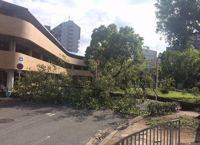 台風21号 近畿から北陸・東海に大きな被害 - モデルプレス
