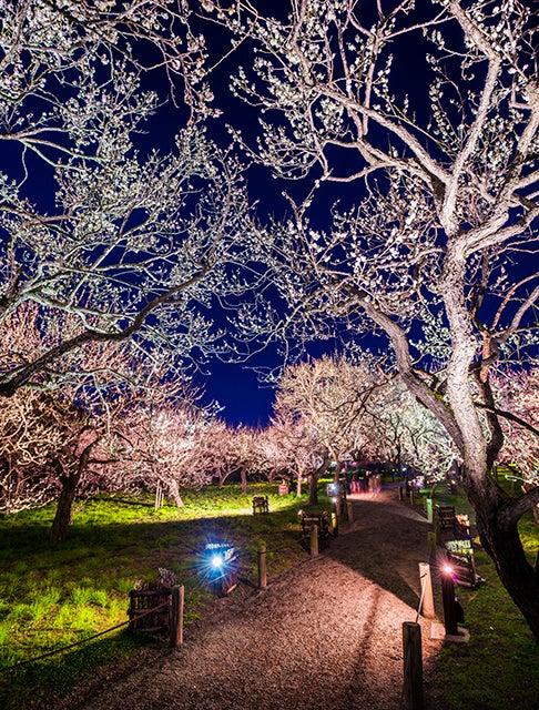 例年開催している夜梅祭の様子(イメージ)(C)茨城県