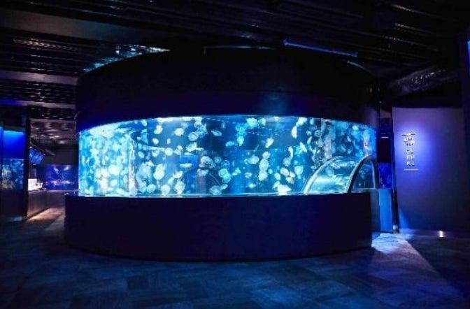 360度パノラマ水槽「GURURI」/画像提供:京都水族館