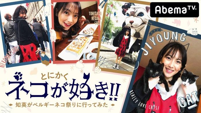 『とにかくネコが好き!!~知英がベルギーネコ祭りに行ってみた~』(C)AbemaTV