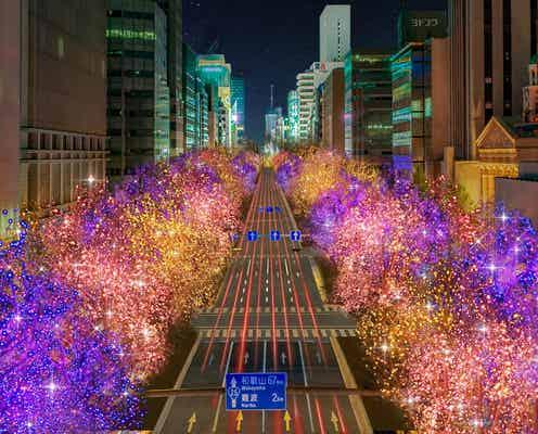 「大阪・光の饗宴2021」イルミネーションが御堂筋や中之島のケヤキ並木を華やかにライトアップ