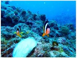 海の中の写真/平祐奈オフィシャルブログ(Ameba)より