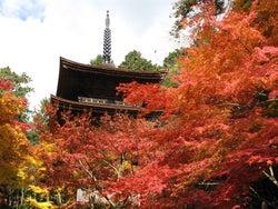 滋賀県で紅葉巡りを満喫!国宝や重要文化財が鮮やかに色づくおすすめスポット9選