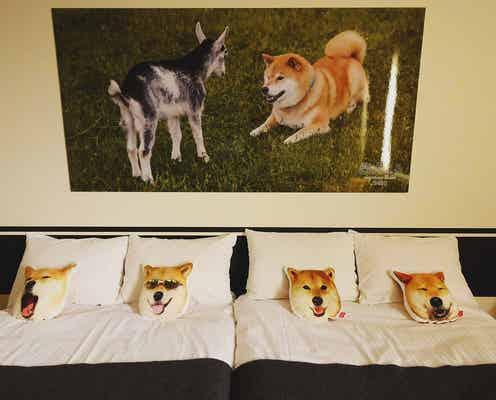 """インスタで人気の「柴犬まる」とホテルがコラボ!""""まるルーム""""が可愛いと話題に"""