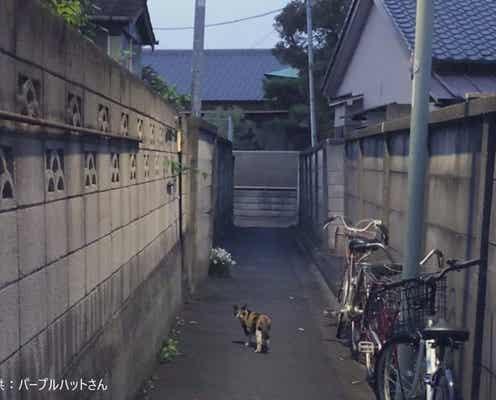 夜が近づく路地裏の小道 猫を写した一枚が完全にホラーゲームの導入部分だと話題