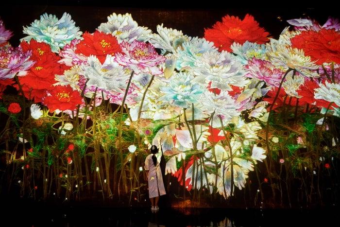 増殖する無量の生命(4月・牡丹)/画像提供:チームラボ