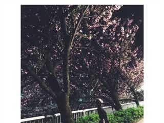 武井咲、夜桜ショットにファン歓喜「撮影者は旦那さん?」の声続出