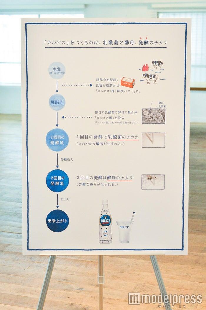 発酵の仕組みも解説(C)モデルプレス