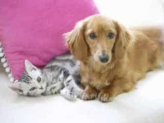 猫好きの人・犬好きの人の特徴!性格や恋愛の相性などを診断
