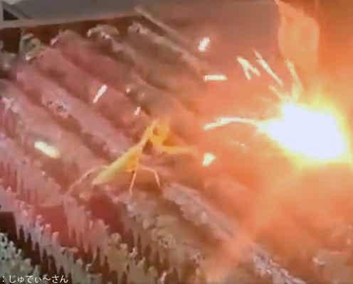 カマキリが火花と戦う姿が衝撃的 投稿者は「カンフーのように見えた」