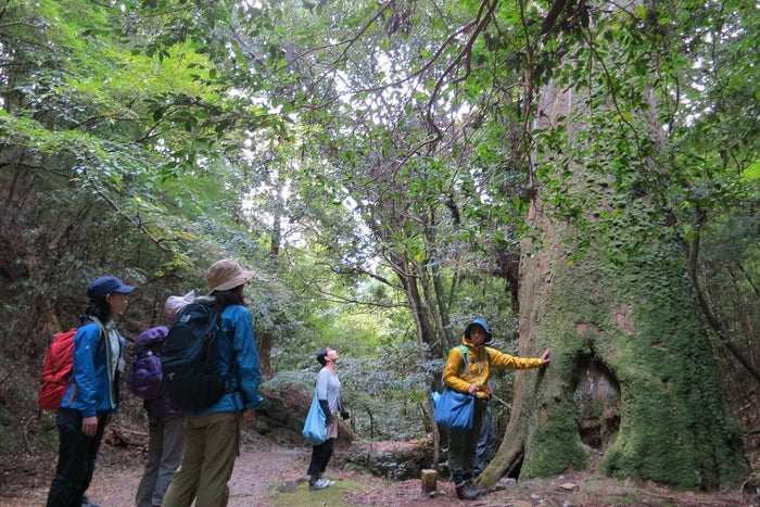 原生林散策/画像提供:ディライト