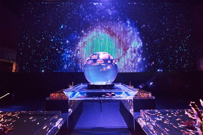 東京会場 展示予定作品「アースアクアリウム・ジャポニズム」/画像提供:エイチアイディー・インターアクティカ
