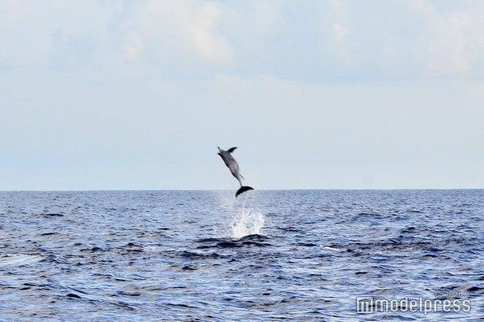 サンセットシャンパンクルーズ/運が良ければイルカの大ジャンプの瞬間も(C)モデルプレス