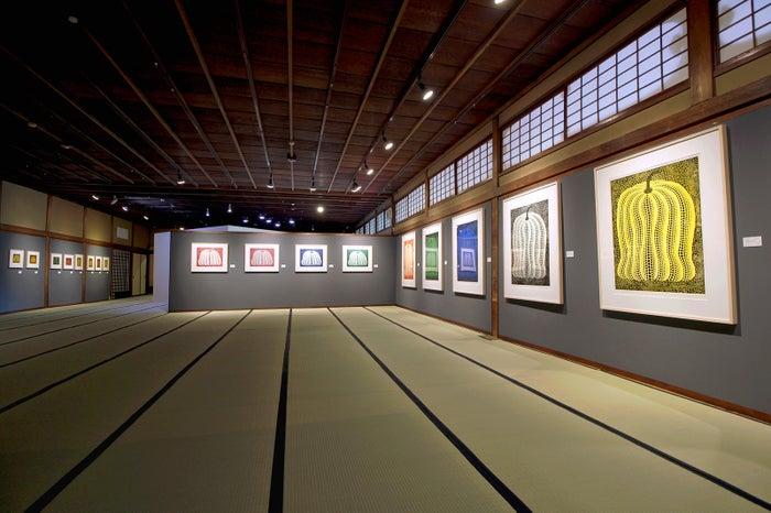 第5展示室 南瓜の間/画像提供:フォーエバー現代美術館 祇園・京都