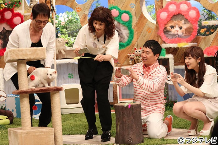 猫の写真撮影大会中の面々(左から)大杉漣、大地真央、田中裕二、指原莉乃(C)フジテレビ