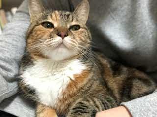 「こっちを見ろにゃ!」忙しい飼い主を邪魔する猫の気持ちにメロメロ♡