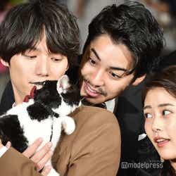 猫をあやす福士蒼汰、大野拓朗、高畑充希(C)モデルプレス