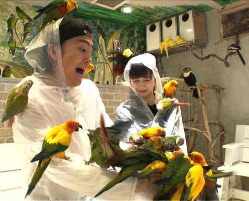 """健太郎&中条あやみが人生初の""""鳥まみれ"""" 話題の浅草名所へ"""