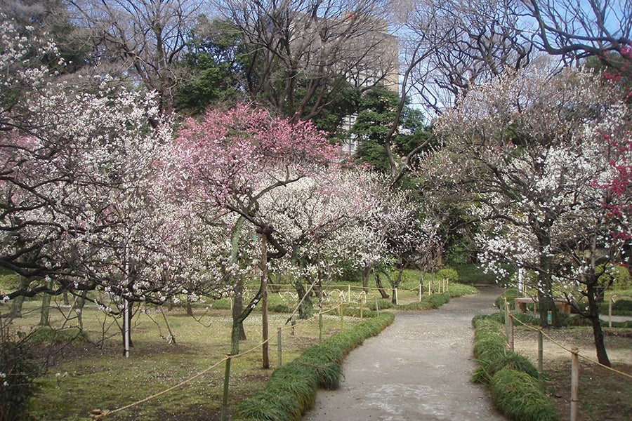 梅香る庭園