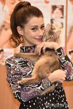 ダレノガレ明美、保護猫の里親探し支援へ 虐待犯に強い怒り