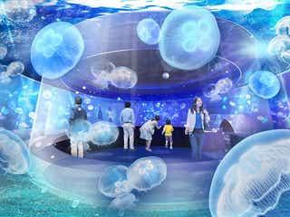 「京都水族館」初の大規模リニューアル、クラゲ新展示が誕生