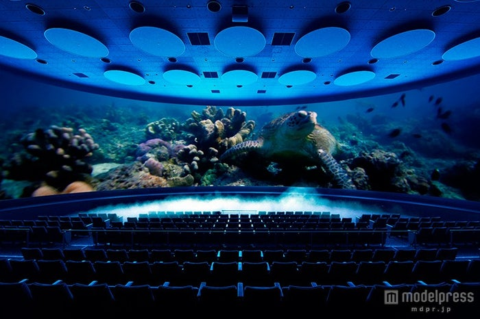 「シアター23.4」の新作「海がめロキシーの冒険」/画像提供:オービィ横浜