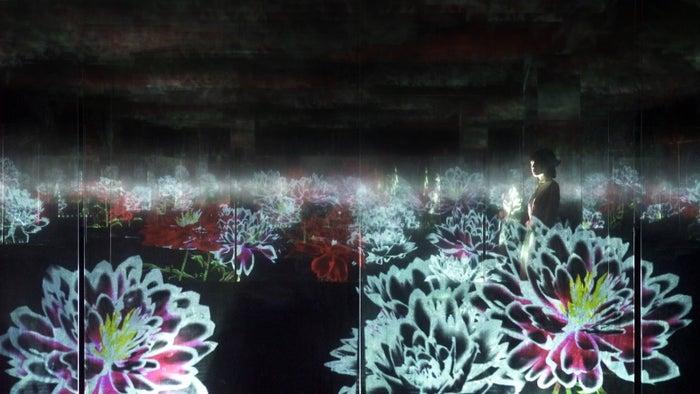 積層された空間に咲く花々(芍薬)/画像提供:チームラボ