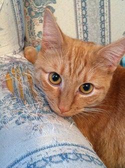 ドアをあけたらニャンニャン!110番通報したのはなんとブルース・リーという名の猫